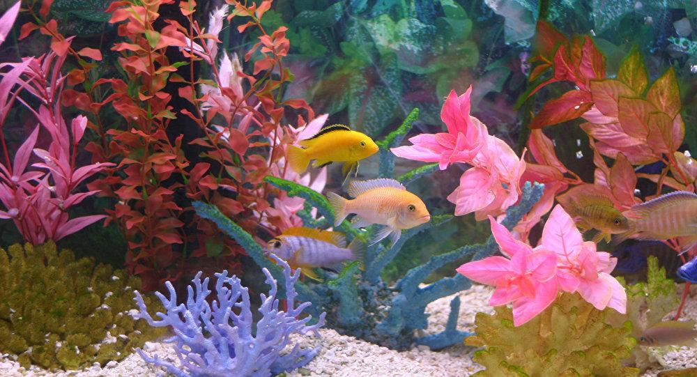 Рыбки в аквариуме, архивное фото