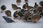 Как правильно кормить птиц