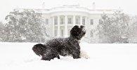 Президентский пес Бо на фоне Белого дома - он переезжает отсюда вместе с хозяевами