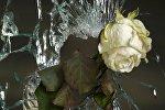 Роза в отверстии от пули террориста в Париже