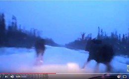 Мужчина проехал по заснеженной трассе между двух лосей