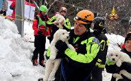 Три щенка спасены из-под завалов отеля в Италии