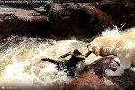 Лабрадор вытащил своего товарища из бурлящей реки