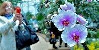 Наведвальнікі фатаграфуюць рэдкія віды архідэй ў мінскім Батанічным садзе