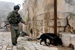 Разминирование российскими инженерами исторической Цитадели древней крепости Алеппо