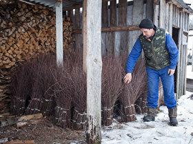В деревне Лунинецкого района заготавливают метлы