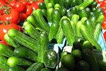 Огурцы и помидоры, архивное фото