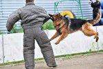 Чемпионат по служебному собаководству