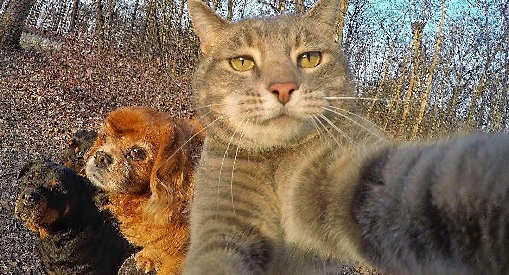 Manny The Selfie Cat - Селфі-кот Мэні