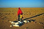Женщина с ребенком в пустыне в Сомали возле коз, умерших от засухи