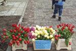 Бесплатные цветы в Витебске