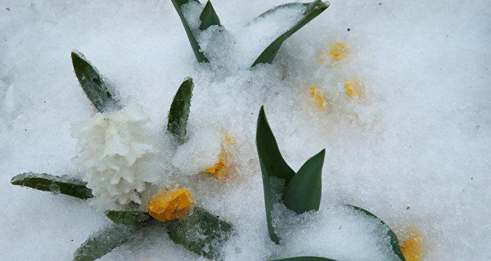 Нарабочей неделе липчан ждет ветер имокрый снег