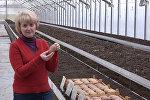 какой картофель белорусской селекции лучше всего выбрать для дачи