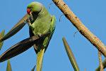 Попугай, архивное фото