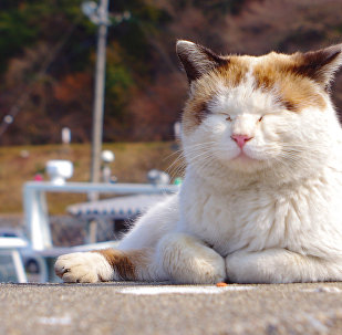 Вясновы кот
