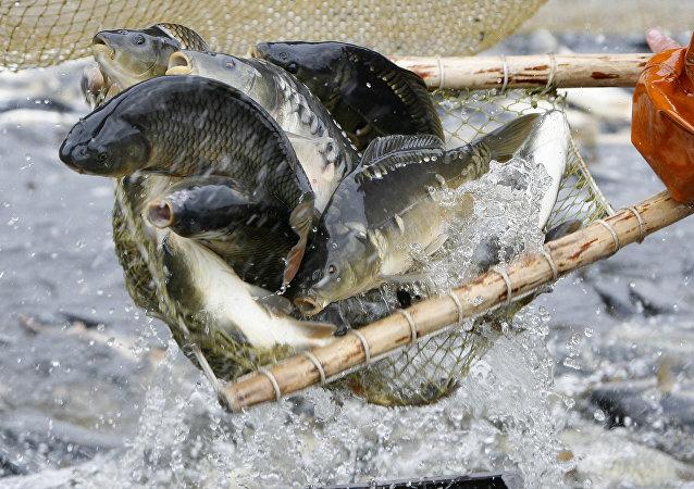 Каб рыбку есці трэба ў ваду лезці