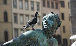 Голубь и статуя