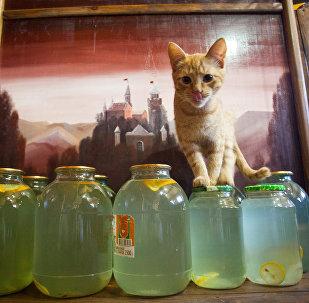 Бярозавы сок