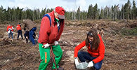 Белорусские спортсмены сажали лес