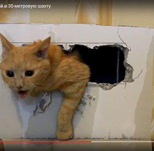 Спасение кошки, упавшей в 30-метровую шахту