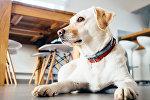 С собакой можно пойти в кафе, но далеко не во всякое