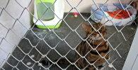 Кот, подстилка, туалет