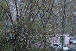 Майский снегопад в Минске
