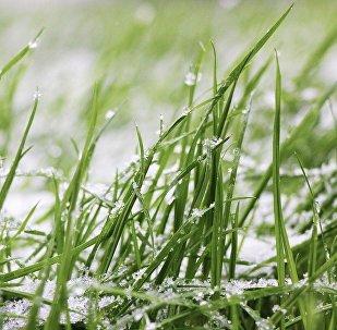 Снег выпаў у маі