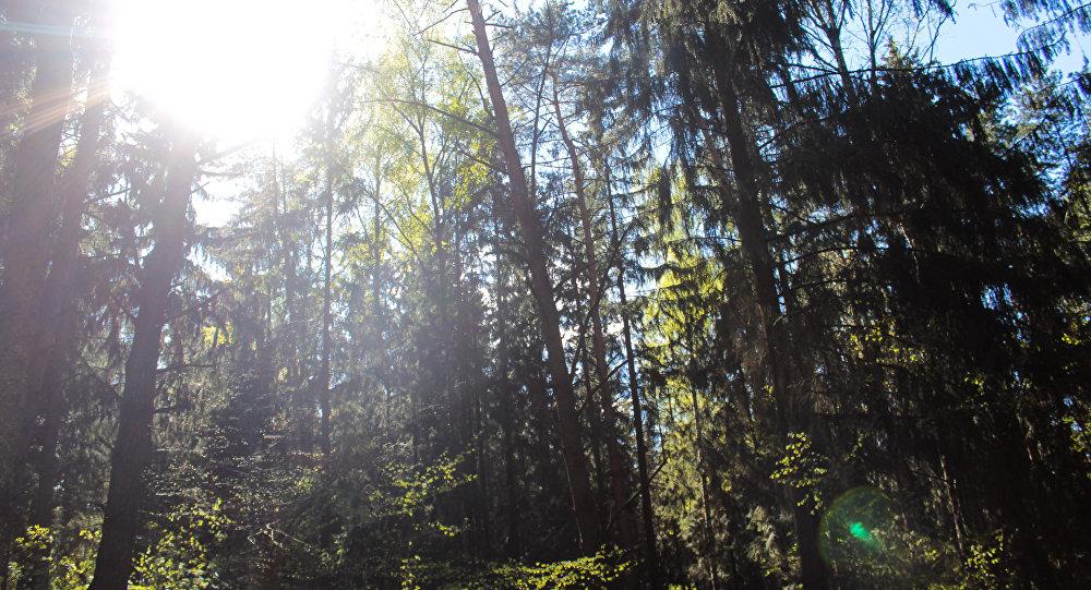 Летні лес