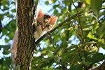 Котенок на дереве