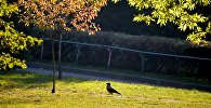 Ворона в минском городском парке