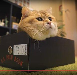 Кот и коробки: популярный в интернете кот Хосико выбирал домик