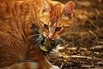 Кот поймал синицу