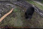 Нападение: как в медведя стреляли из лука и что из этого вышло
