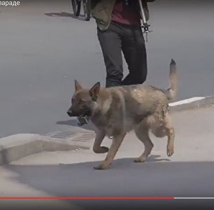 Видеофакт: пес украл экшн-камеру и снял часть велопарада