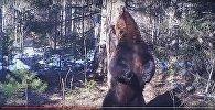 Кадры с танцующим возле дерева медведем рвут интернет