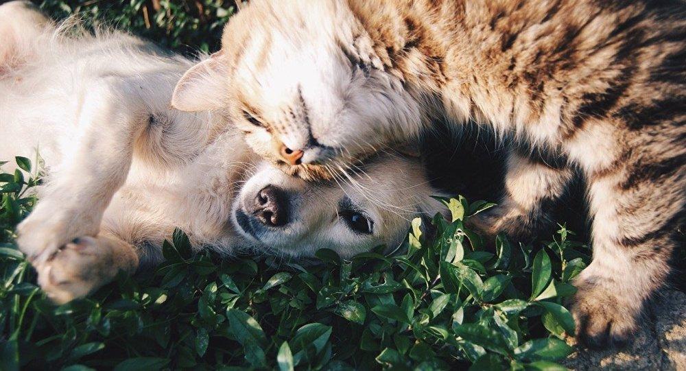 Чем помочь кот и пес