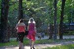 Тополиный пух летает в Минске