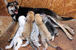 Собака с тигрятами