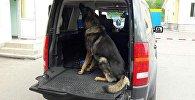 Обнаружить боеприпасы помогла служебная собака