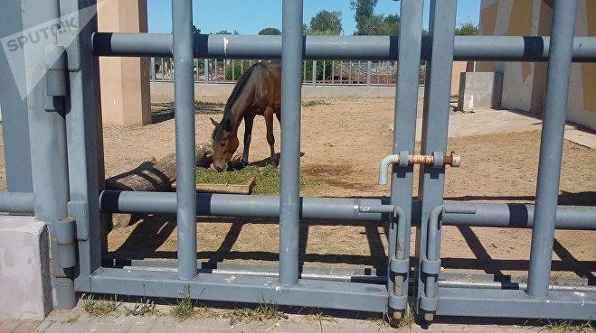 Новый слоновник в Гродненском зоопарке пока обживают другие