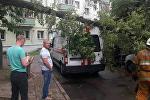 Упавшее в Минске дерево