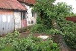 Поваленное в результате непогоды дерево в Витебской области