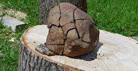 Исследователь–энтузиаст из Витебска утверждает, что нашел фрагмент метеорита