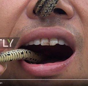 Китаец продевает ядовитую змею через нос и достает изо рта, видео