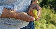 Наше здоровье во многом зависит от нашего питания