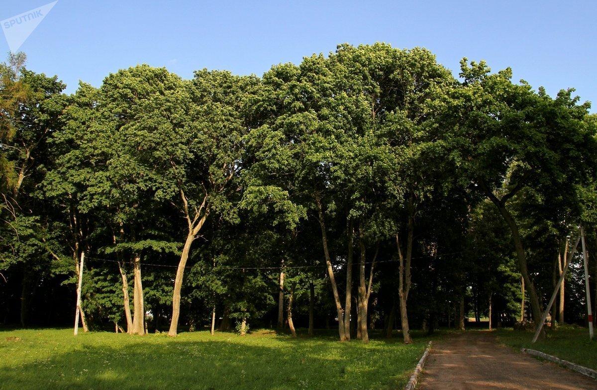 Парк в имении занимает почти 4 гектара. Все деревья посажены в послевоенное время, только некоторые в 20–30-е годы прошлого века.