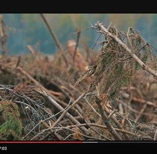 Фильм о ликвидации последствий урагана в Беларуси летом прошлого года, видео