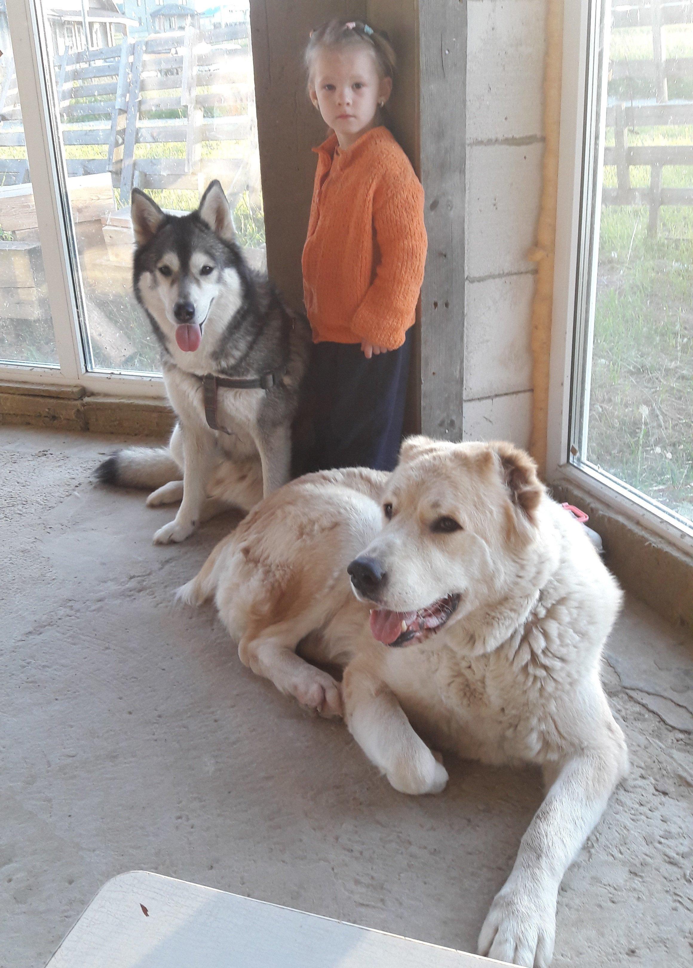 Яна считает, что собаки понимают ее лучше всех