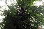 Мальчик забрался на дерево за котом